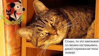 Почему стерилизованная кошка загуляла? Синдром реминантного яичника