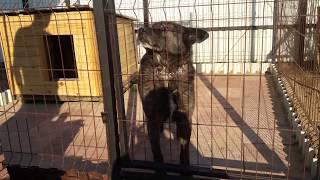Вольер для собаки/У Альфа новоселье