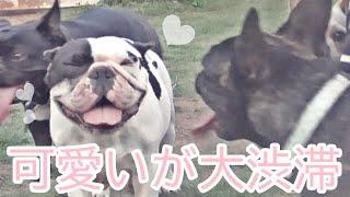 【〇〇ロスの人々へ】犬好きがこれを見たらどう思うだろうか?[0はじ]