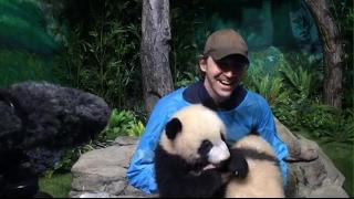 Lee Pace and his pandas -  live steam capture PART 2