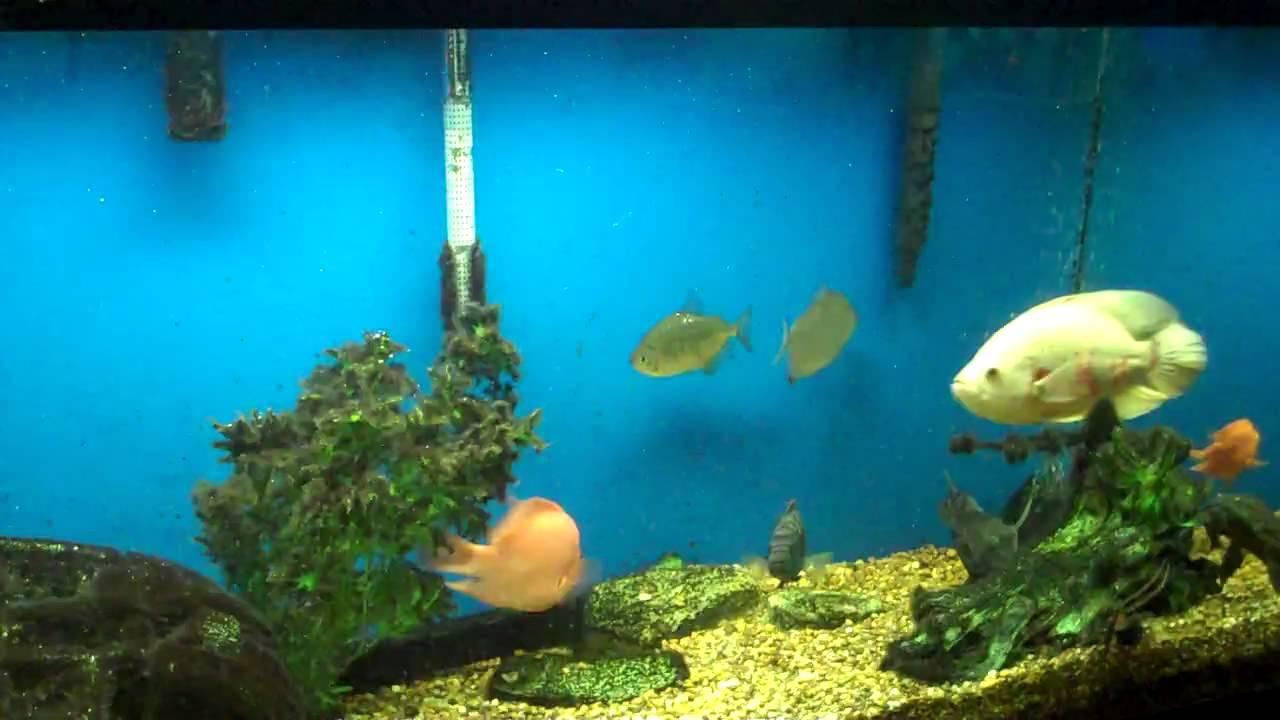 Harp's Exotic Fish & Pets (Tropical Freshwater Fish 2)