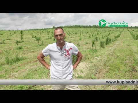 Plantaža lješnjaka Emić - Lukavac