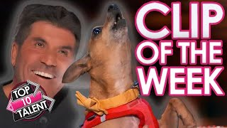 Adorable Dog SURPRISES Simon Cowell By SINGING Celine Dion On America's Got Talent 2021!