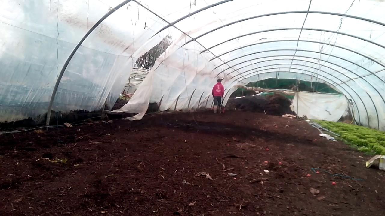 semis sur compost scea biodivy 29 youtube. Black Bedroom Furniture Sets. Home Design Ideas