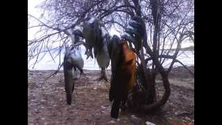 Ψαροντούφεκο ψάρεμα στη Νάξο spearfishing Naxos Aegean(Ψαροντούφεκο ψάρεμα χειμωνιάτικο στην Νάξο-Αιγαίο με ροφό σαργούς και μεγάλη χειλού σε ομιχλώδης τοπίο..., 2009-02-28T10:55:27.000Z)