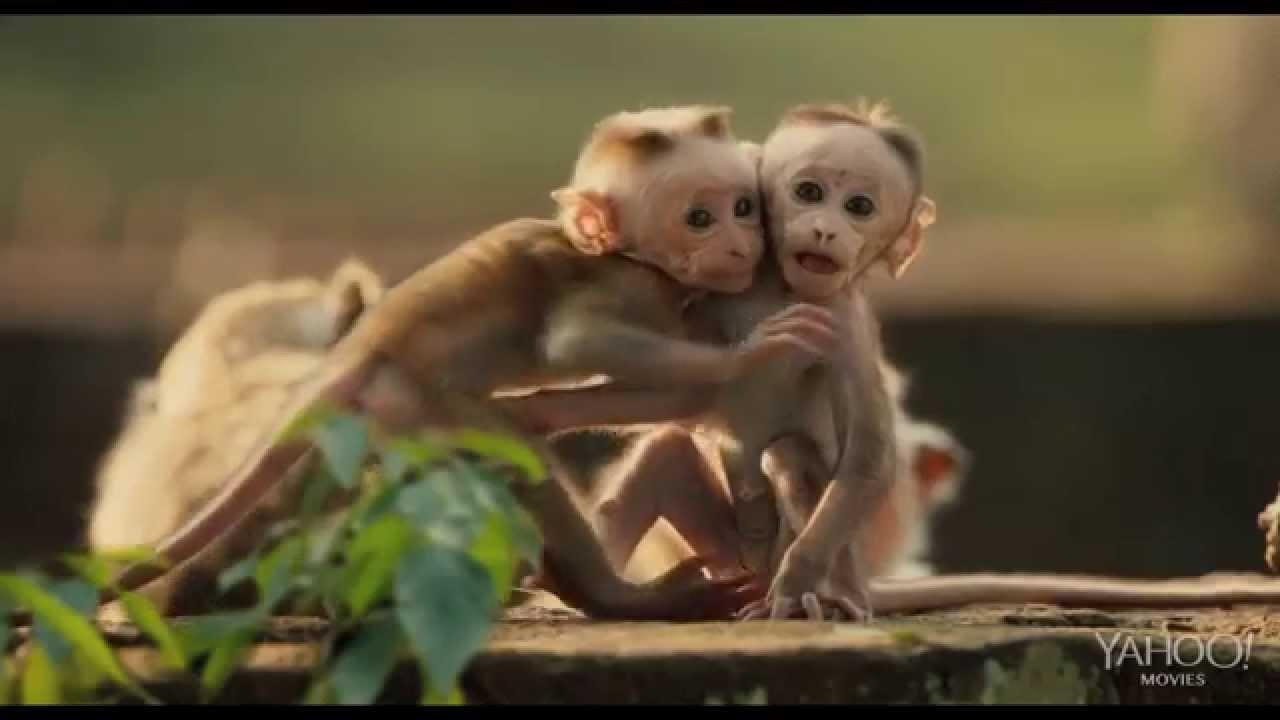monkey kingdom official trailer 2 hd youtube