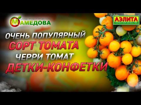 Очень популярный сорт томата. Черри Томат Детки-Конфетки