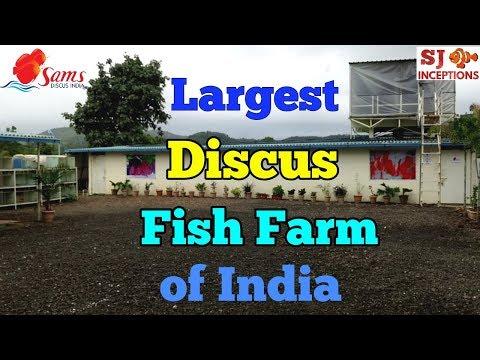 India's Largest Discus Fish Farm - Sams Discus India