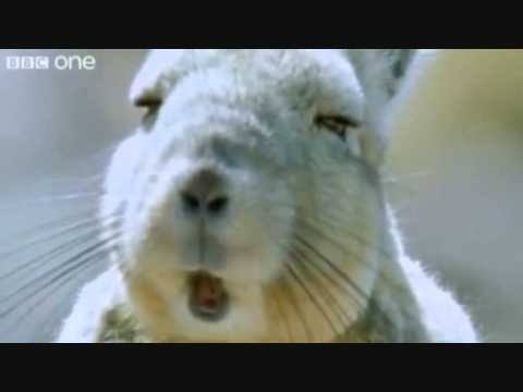 Funny Talking animals Rabbit Booooobs.wmv