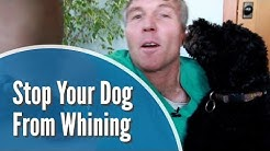 How To Stop Dog Whining
