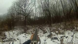 загонная охота на косулю.deer hunting