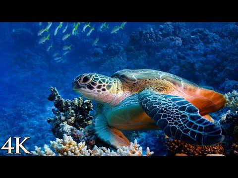 *NEW* 12 HR 4K Underwater Film: Treasures of the Ocean - Rare & Colorful Sea Life Journey + Music
