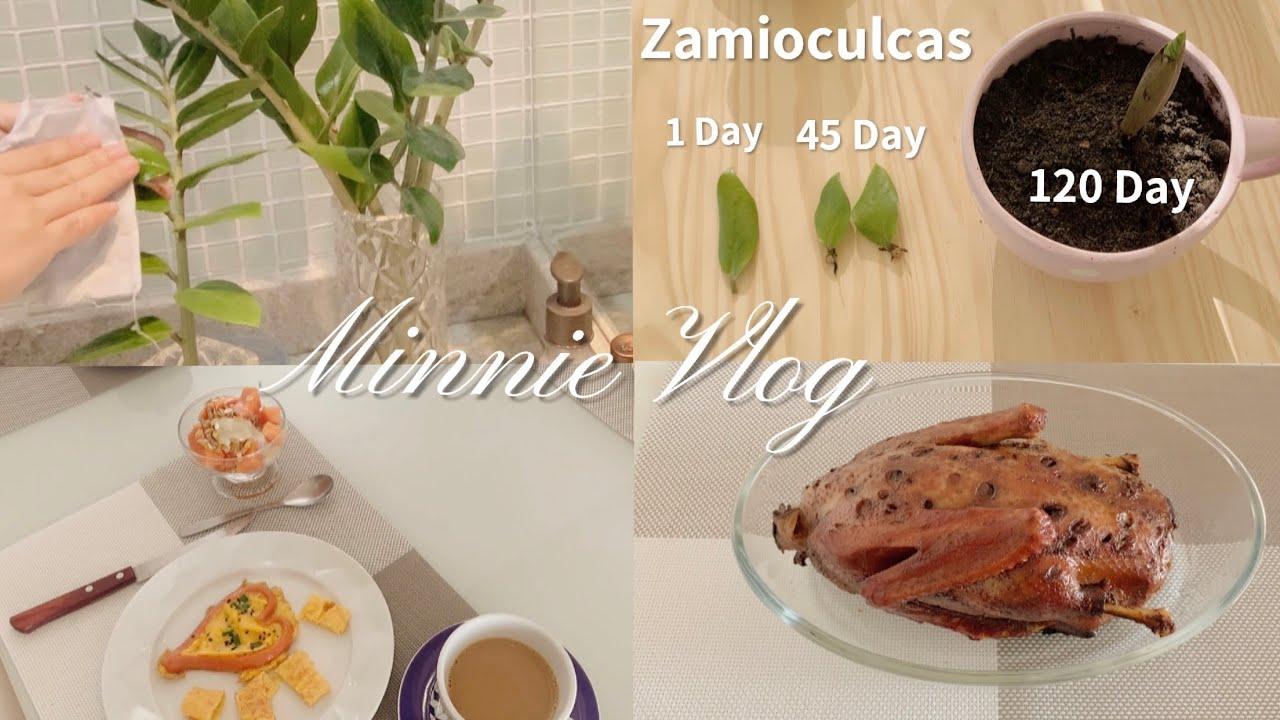 VLOG 17 | 我的周末|清洁金钱树 | 叶插繁殖🌿家庭版五香脆皮烤鸭|父亲节快乐|日常VLOG
