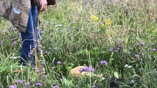 Омар. Восточноевропейская овчарка в дар и в добрые руки