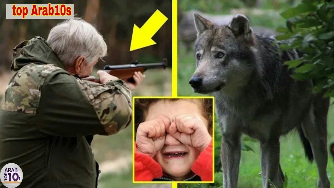 هذا الذئب أنقذ طفلا صغيرًا، وعندما كبر الطفل لن تصدق كيف رد المعروف للذئب