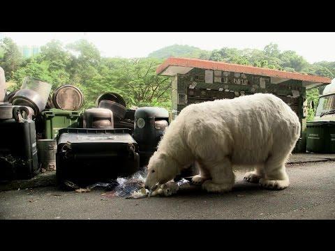 Homeless Polar Bear in Hong Kong
