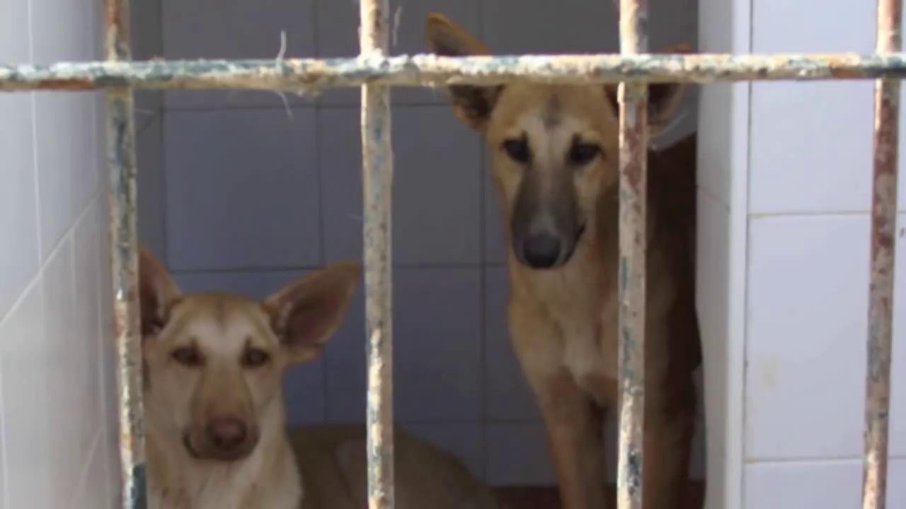 Que tu perro no acabe en la perrera youtube - Perrera de vilafranca ...