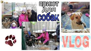 Приют для собак Красноярск школа 63