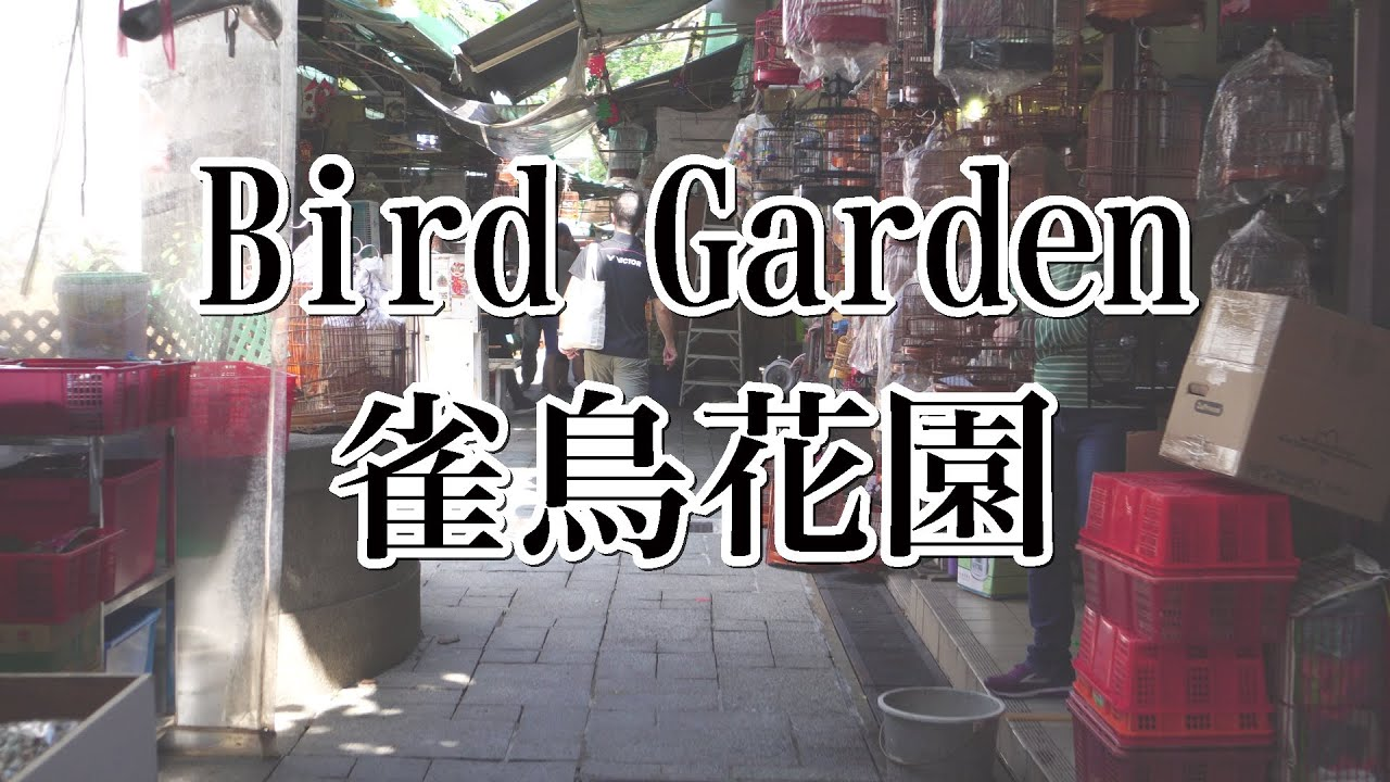 バードガーデン(雀鳥花園) - YouTube