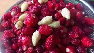 видео Компот забродил (часть 1) | Compote ferment (part 1)