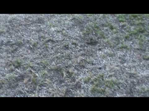 how to get rid of moss growing in your grass