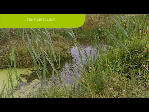 Zone Libellule : Recover your treated wastewater and regenerate local biodiversity - SUEZ