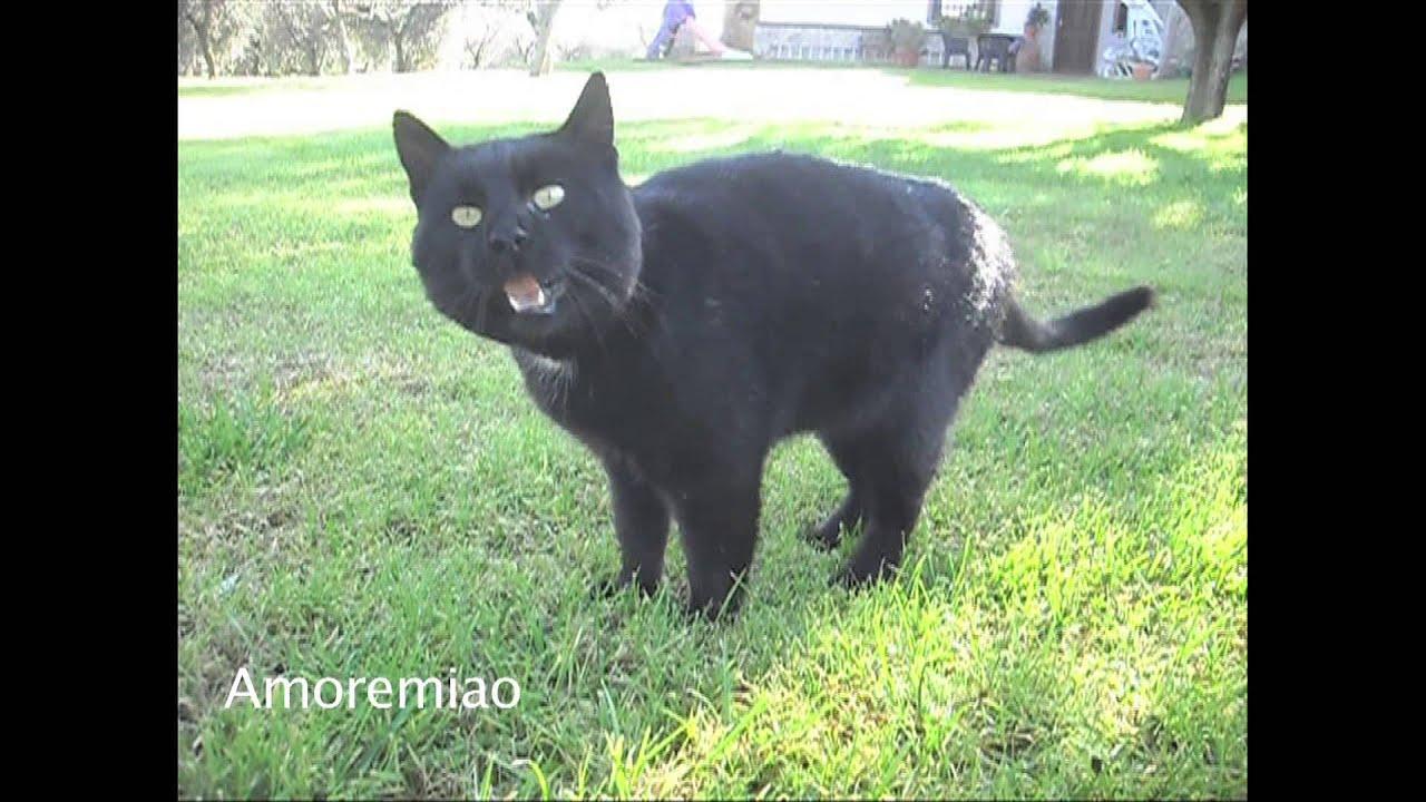 Il gatto che starnutisce come un beb youtube for Gatto che starnutisce
