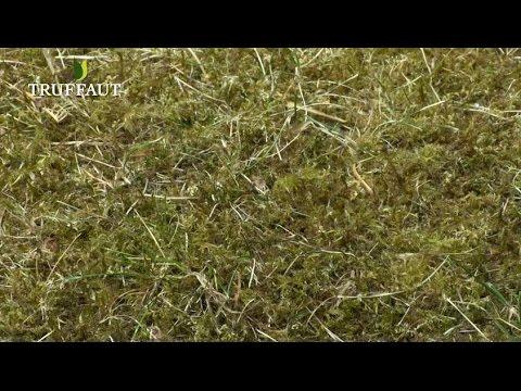 comment eliminer la mousse du gazon truffaut