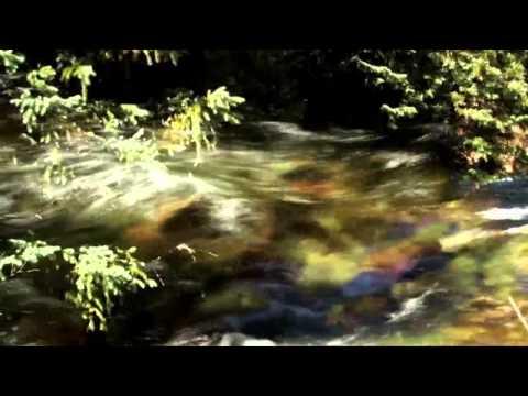 Иоганн Вольфганг Гётеиз YouTube · Длительность: 25 мин7 с