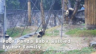 Poor Panda Baby Bullied By Her Family | iPanda