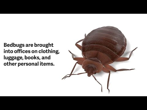 Bedbugs In The Workplace