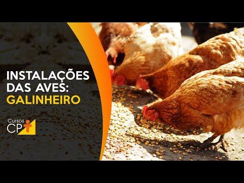 Clique e veja o vídeo Conheça as instalações do popular galinheiro