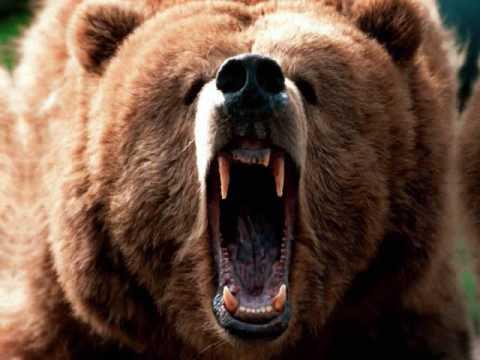 Beardance - Ute Mountain Ute Tribe