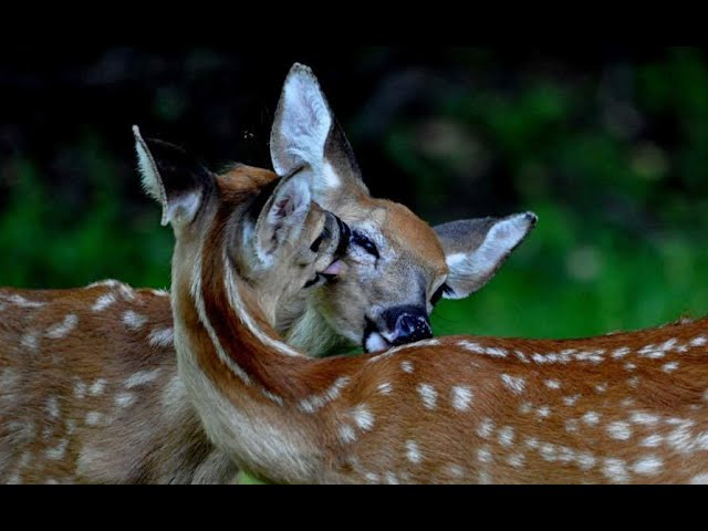 1430 Connection / Springtime and Wildlife in Maryland with DNR Wildlife Technician Jane Burgess