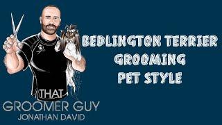 Bedlington Terrier Grooming  Pet Style