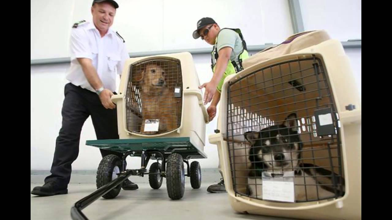 Paws n claws pet shipping service youtube paws n claws pet shipping service sciox Gallery