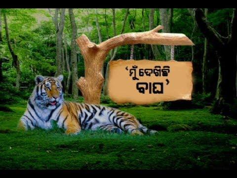 Tigress Sundari Create Fear At satkosia
