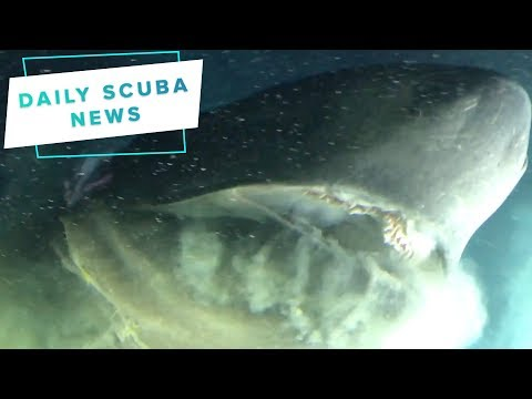 Daily Scuba News - The OceanX Team Need Some Clean Pants