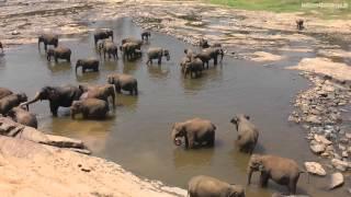 Sri Lanka - die Perle im indischen Ozean (Holidays4Runaways)