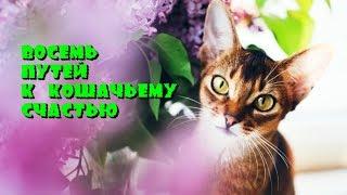 Восемь путей к кошачьему счастью