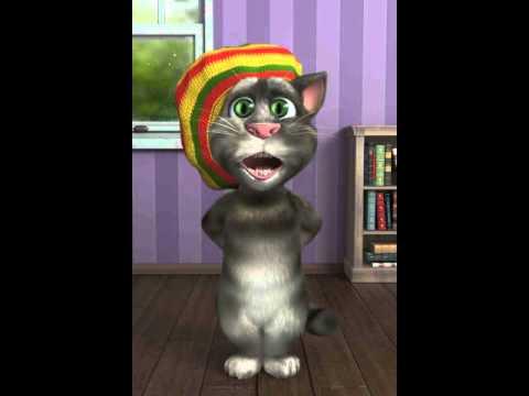 Jamaican Tom cat