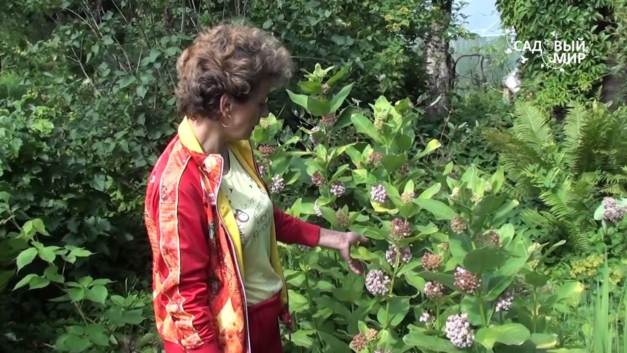 Купить искусственные цветы по выгодной цене в украине. Головки искусственных цветов для декора и рукоделия, добавки к букетам, искусственные листья и зеленые ветки, хвоя. Ветка остролиста (падуб) в блестках, серебро.