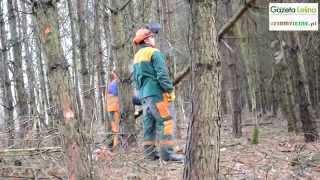 Stawki na prace leśne
