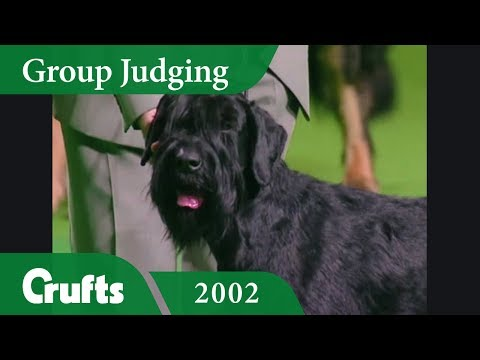 Giant Schnauzer wins Working Group Judging at Crufts 2002