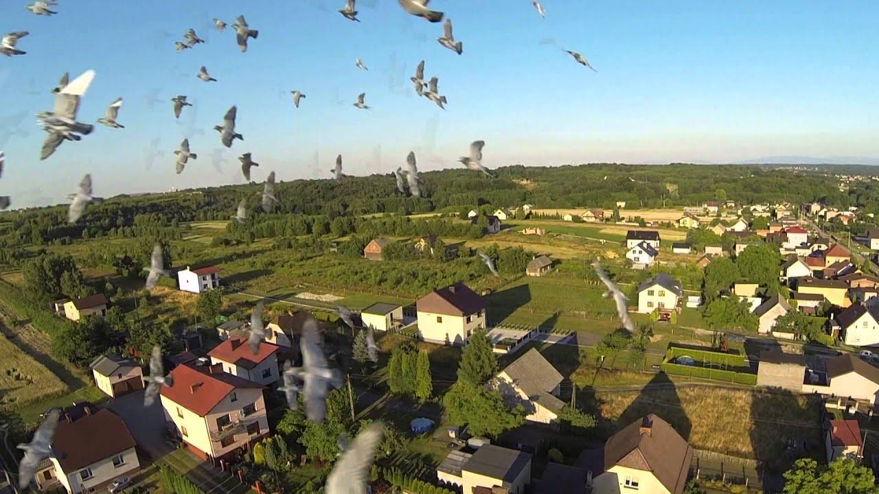 Gołębie - nasza pasja i tradycja - Tomasz Witek, Alojzy Wojaczek