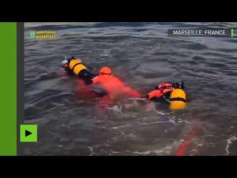 Une baleine d'une quinzaine de mètres piégée dans le port de Marseille