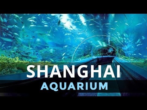 Underwater Tunnel at the Shanghai Aquarium China