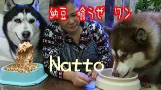 我が家の健康食 好んで食べる納豆、安価で栄養満点ですね。 日本の味は...