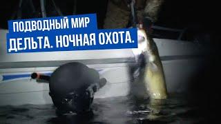Подводный мир. Дельта. Ночная охота