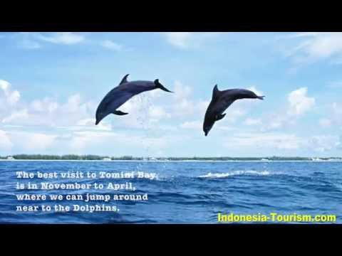 Underwater Journey in Tomini Bay - Sulawesi - Indonesia
